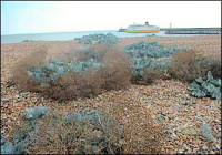 Photo of Tidemills beach