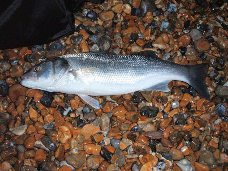 Seaford Bass_4834242648_l
