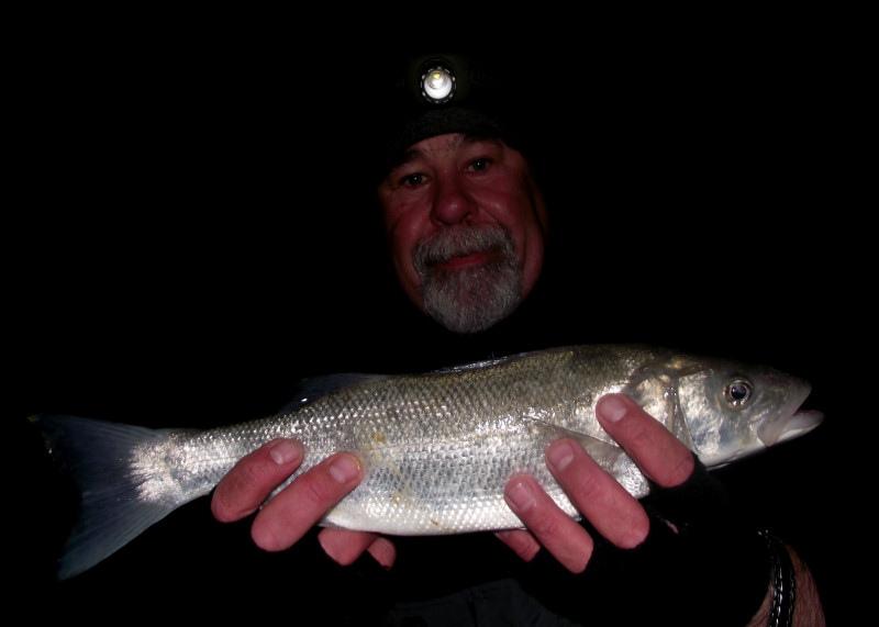 Seaford Bass_5718396931_l
