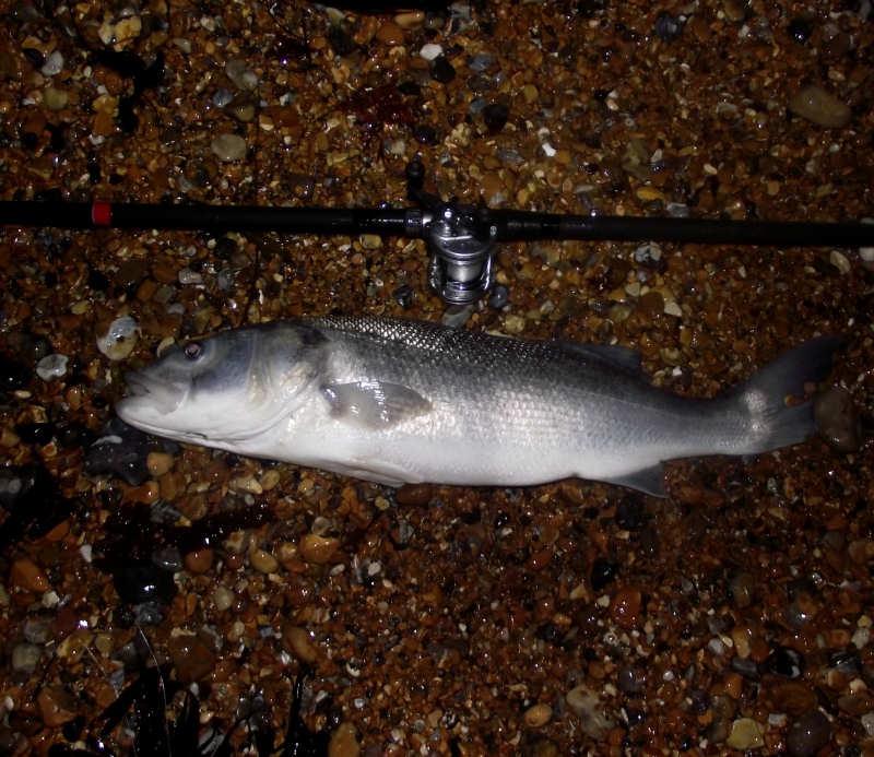 Seaford Bass_5918337858_l