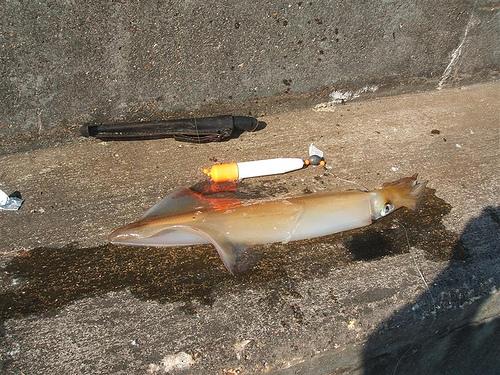 Squid three_2489338913_m