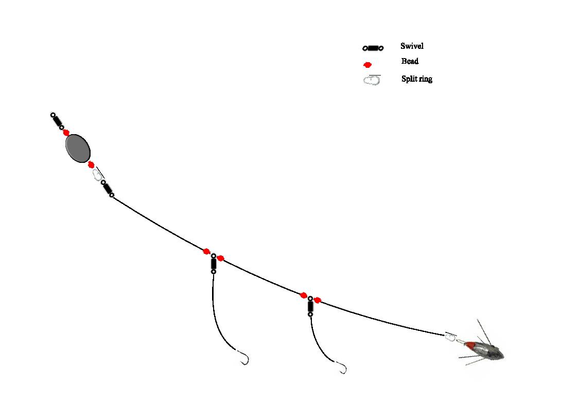 Diagram of fishing line setup diagram of kelp bass for Bass fishing rod setup